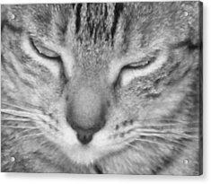 Ginger's Closeup Acrylic Print by Maria Bonnier-Perez