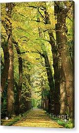 Ginkgo Biloba Trees Acrylic Print