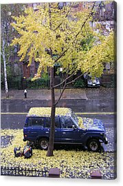 Acrylic Print featuring the photograph Ginkgo In Fall by Erik Falkensteen