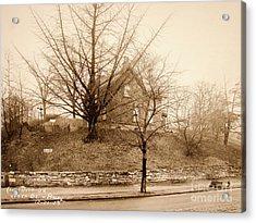 Ginkgo Tree, 1925 Acrylic Print