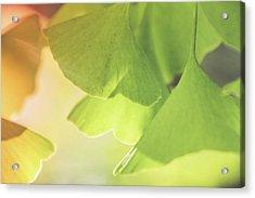 Gingko Soft Acrylic Print