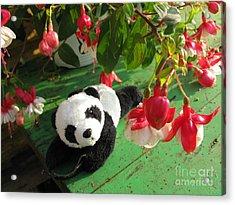 Acrylic Print featuring the photograph Ginny Under The Red And White Fuchsia by Ausra Huntington nee Paulauskaite