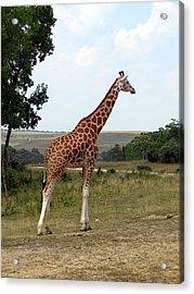 Giraffe 3 Acrylic Print by George Jones