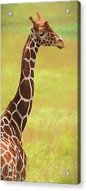 Giraffe - Backward Glance Acrylic Print