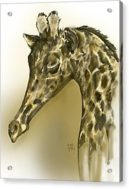 Giraffe Contemplation Acrylic Print by Shirley Heyn