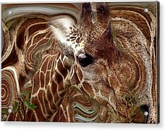 Acrylic Print featuring the photograph Giraffe Dreams No. 1 by Wayne King