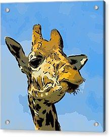 Giraffe Acrylic Print by Gareth Davies