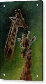 Giraffe Giraffe Acrylic Print