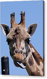 Acrylic Print featuring the photograph Giraffe by JT Lewis