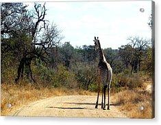 Acrylic Print featuring the photograph Giraffe by Riana Van Staden