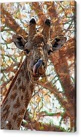 Giraffe Says Yum Acrylic Print