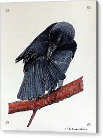 Girdie Acrylic Print