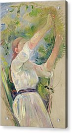 Girl Gathering Cherries Acrylic Print by Berthe Morisot