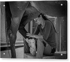 Girl Treats Horse Acrylic Print by Sebastian Graf