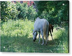 Giverny Mare And Foal Landscape Acrylic Print by Nadine Rippelmeyer