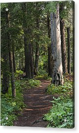 Acrylic Print featuring the photograph Glacier National Park Woodland Trail by Kevin Blackburn
