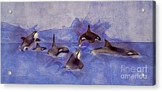 Glacier Whales Acrylic Print by Methune Hively