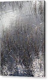 Glades 2 Acrylic Print by Richard Smukler