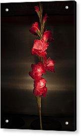 Acrylic Print featuring the photograph Gladioli_variation#4 by Richard Wiggins