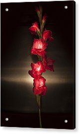Acrylic Print featuring the photograph Gladioli_variation#8 by Richard Wiggins