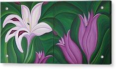 Gladiolus Carneus Acrylic Print by Marinella Owens