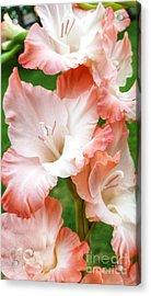 Gladiolus Ruffles  Acrylic Print