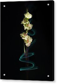 Acrylic Print featuring the photograph Gladiolus Variation#02 by Richard Wiggins