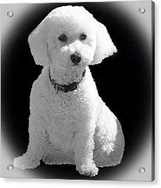 Glamorous Coco Acrylic Print by Emmy Marie Vickers