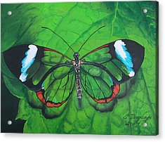 Glass Wing Butterfly Acrylic Print by Sharon Duguay