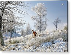 Acrylic Print featuring the photograph Glen Shiel Misty Winter Deer by Grant Glendinning