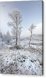 Acrylic Print featuring the photograph Glen Shiel Misty Winter Trees by Grant Glendinning