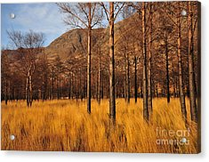 Glen Torridon Acrylic Print by Nichola Denny
