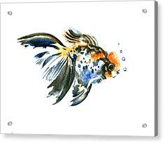Goldfish Acrylic Print by Suren Nersisyan