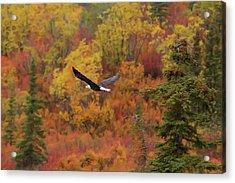 Glide Path Acrylic Print by Ed Boudreau