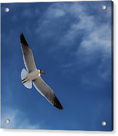 Glider Acrylic Print by Don Spenner