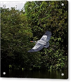 Acrylic Print featuring the photograph Gliding by Ron Dubin