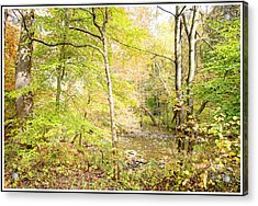 Glimpse Of A Stream In Autumn Acrylic Print