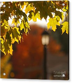 Acrylic Print featuring the photograph Glimpse Of Autumn by Aimelle