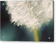 Acrylic Print featuring the photograph Glisten by Amy Tyler