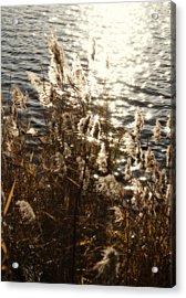 Glisten Acrylic Print by Ariane Moshayedi