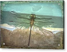 Glistening In Nature Acrylic Print