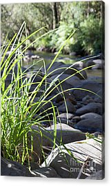 Acrylic Print featuring the photograph Glistening In The Sunlight by Linda Lees