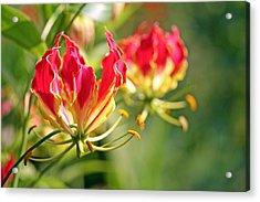 Gloriosa Flame Acrylic Print