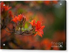 Glorious Blooms Acrylic Print by Mike Reid