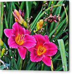 Glorious Daylilies Acrylic Print by Janis Nussbaum Senungetuk