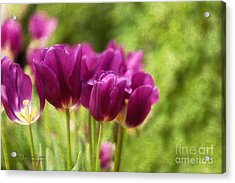 Glorious Days Acrylic Print by Beve Brown-Clark Photography