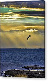 Acrylic Print featuring the photograph Glorious Evening by Jan Amiss Photography