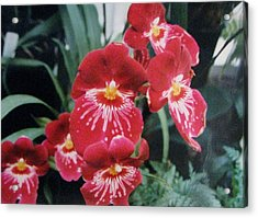 Acrylic Print featuring the photograph Glorious Fleur by Judyann Matthews