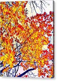 Glorious Foliage Acrylic Print