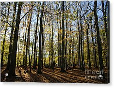 Acrylic Print featuring the photograph Glorious Forest by Kennerth and Birgitta Kullman
